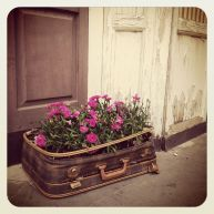 Traveling Flowers