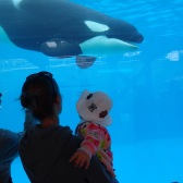 With mom looking at Shamu