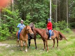 Horses - Family