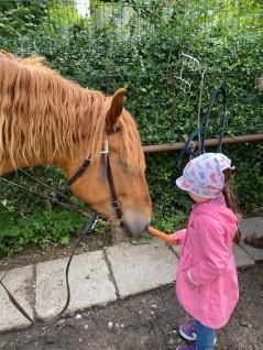 horses - feeding carrots