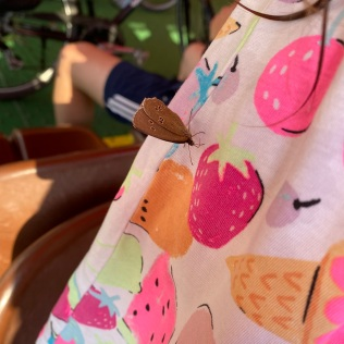 Butterfly on a strawberry dress